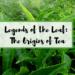 Origins of Tea
