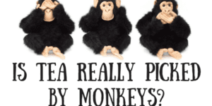Monkey Picked Tea