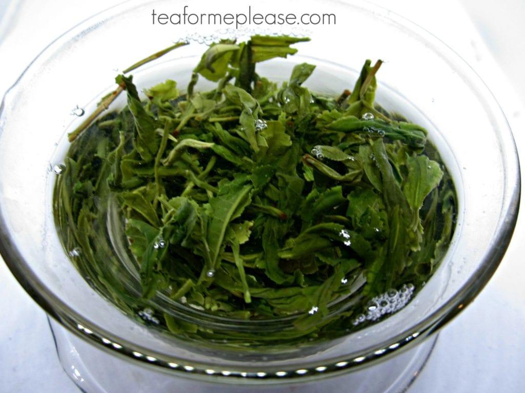 Korean green tea leaves in a gaiwan