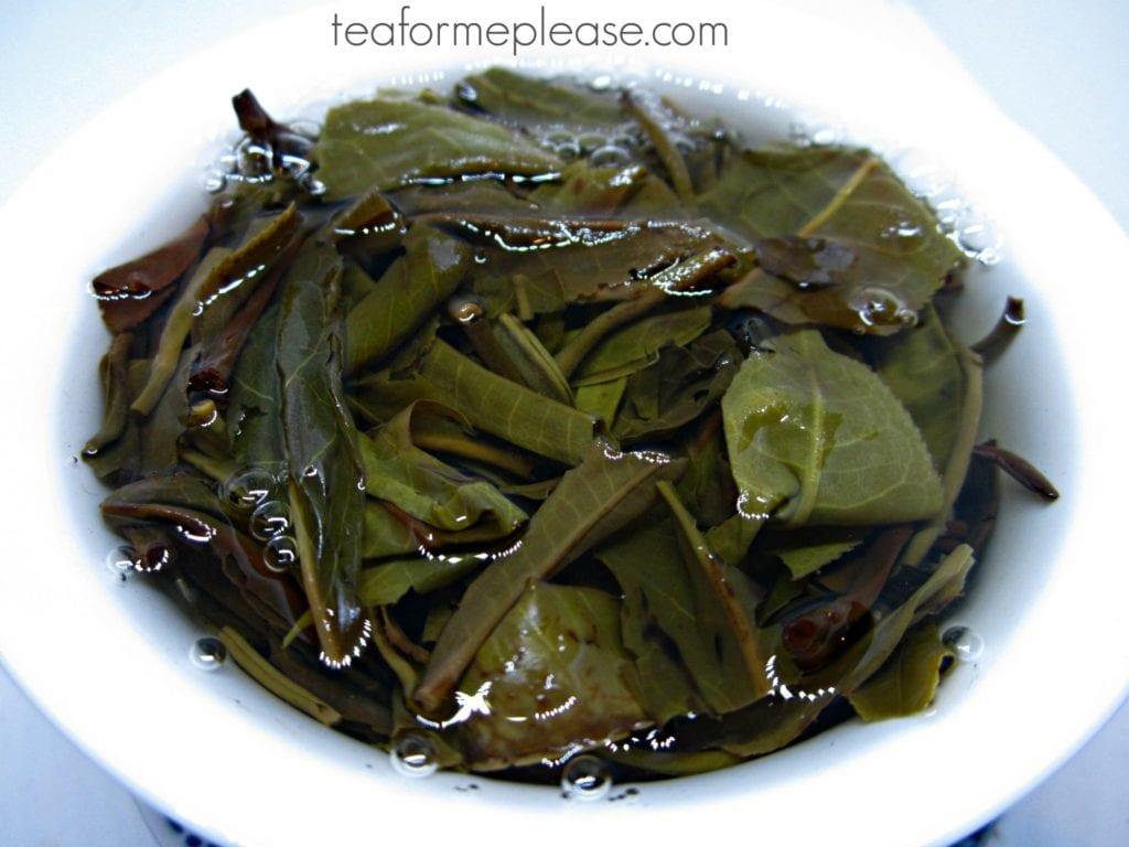Jade Rabbit puerh tea leaves in gaiwan full of water