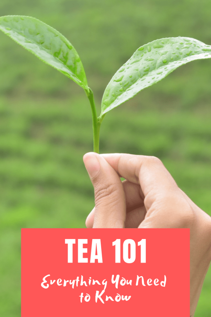 Tea 101 - Everything You Need to Know About Tea