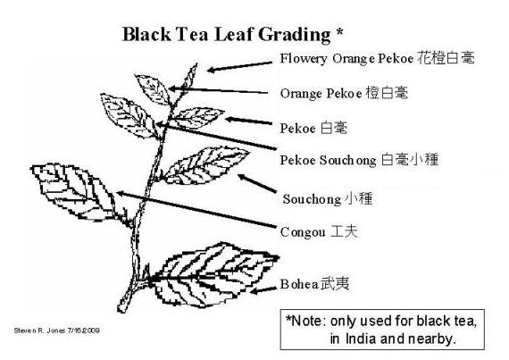Tea Leaf Grading Chart