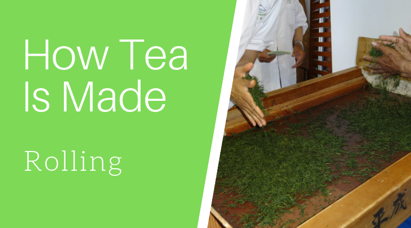 How Tea is Made: Rolling