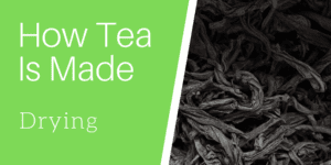 How Tea Is Made: Drying