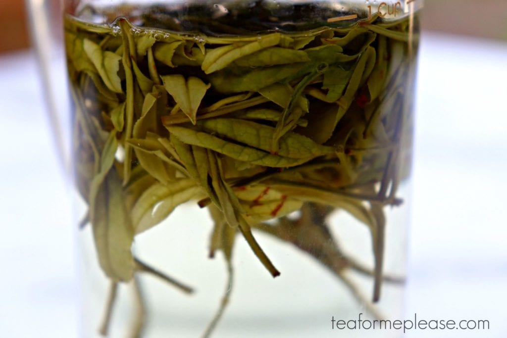 Masters Yu Qian Anji Bai Cha brewing in water