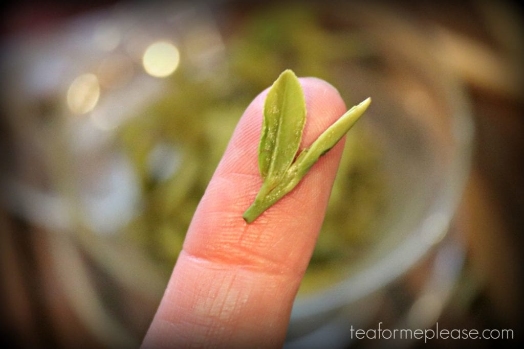 Masters Shi Feng Long Jing leaf on finger