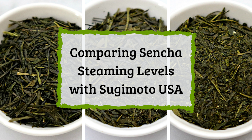 Comparing Sencha Steaming Levels with Sugimoto USA