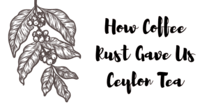 How Coffee Rust Gave Us Ceylon Tea