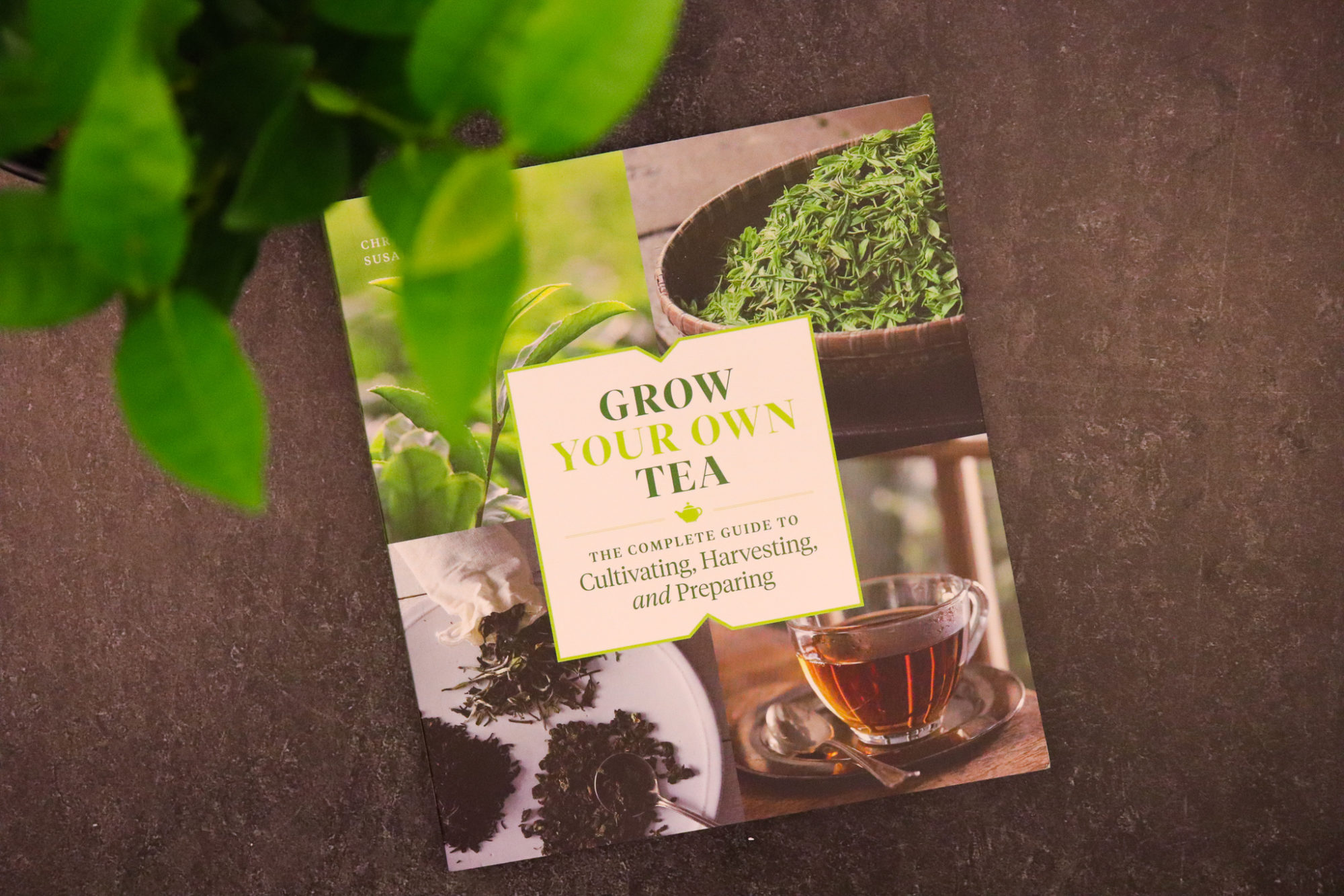 Grow Your Own Tea by Christine Parks and Susan M. Walcott