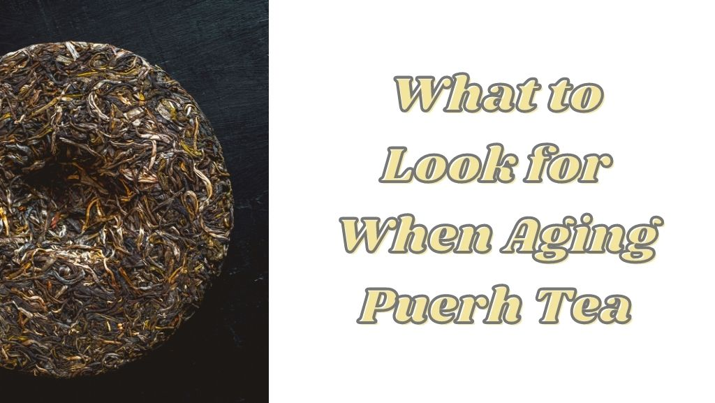 What to Look for When Aging Puerh Tea